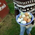 ¿Qué edad debe tener una gallina para empezar a poner huevos?
