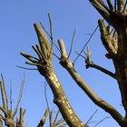 How to pollard a tree