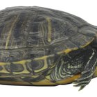 List of Small Pet Turtles