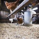 DIY Chicken Coop Designs