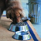 How to Keep Birds Away From Dog Food & a Dog's Drinking Water