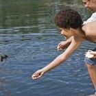 Cómo alimentar patos silvestres bebé