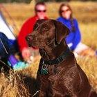 Acampar en el lago Travis, Texas