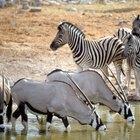 Problemas ecológicos en el bioma de la pradera africana