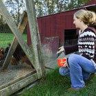 Como impedir animais de entrar em um galinheiro