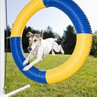 What Dogs Are Eligible for AKC Agility?
