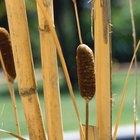 Como limpar persianas de bambu