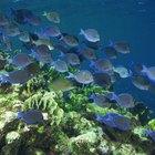 Importancia ecológica de las algas