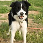 Cedar Mulch & Dogs