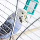 How Large of a Cage Do Parakeets Require?