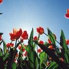 Plantas que se abren con la luz del sol y se cierran en la oscuridad