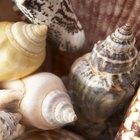 Como limpar e polir conchas