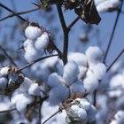 ¿Cuánta de la ropa del mundo está hecha de algodón?