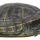Cómo construir un hábitat para tortugas semi-acuáticas