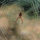 Formas naturales para deshacerte de las hormigas y arañas en casa