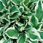 Lista de plantas de verano