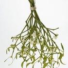 Spray para el cabello como conservante de flores y follaje