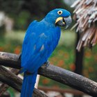 Pájaros hervíboros