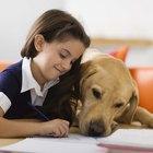 Cómo enseñarle a los niños sobre los animales domésticos