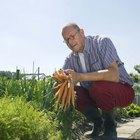 Qué puedo plantar para conejos en una parcela de alimentos