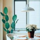 Cactus que se ponen de color marrón y quebradizo