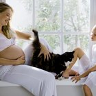 Do Cats Know When You're Pregnant?
