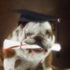 What Do They Teach Dogs on the First Day of Obedience School?