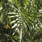 Como fazer um telhado de folhas de palmeira