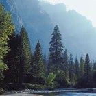 Campamentos y pesca en el norte de California