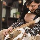 Quanto tempo os beagles ficam no período de parto que antecede o nascimento