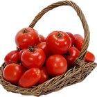 Cómo lograr una cosecha de tomate exitosa