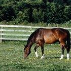 Vermífugo caseiro para cavalos
