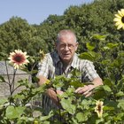 How to Look After Sunflowers
