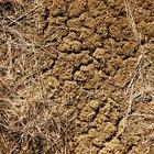 Árboles y arbustos resistentes a la sequía