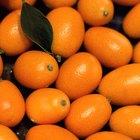 Cómo comer naranjas chinas