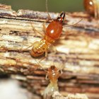 How to identify wood eating insects