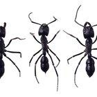 Como se livrar das formigas que atacam suas plantas