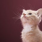 Natural Ways Help Kittens With Hairballs