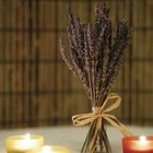 Stems of dried lavender may be bundled together and tied with twine, ribbon or lace to stand alone.
