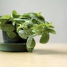Fontes naturais de cianeto em plantas