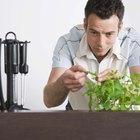 Como tratar folhas de hortelã com pontos pretos e marrons