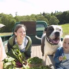 Steamed Vegetables for Dogs