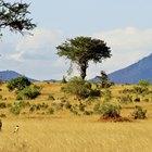 Tipos de árboles, hierba y arbustos en la sabana
