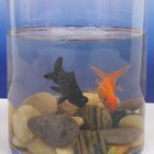How Do Fantail Goldfish Have Babies?
