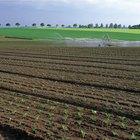 Los mejores métodos de control de maleza usados en agricultura orgánica