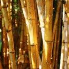 Como fazer a estrutura de um tenda usando postes de bambu