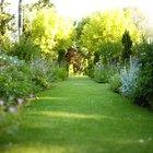 Principales factores que afectan el crecimiento de las plantas