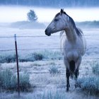 Uso de esteroides Stanozolol en un caballo