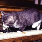 Relaxation Music for Cats