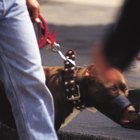 Dog muzzles that allow eating & drinking